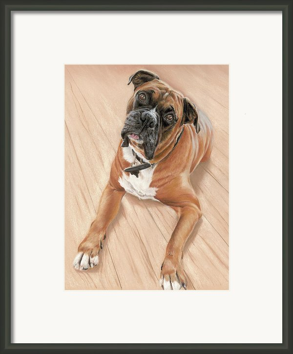 Taz My Best Friend Framed Print By Vanda Luddy