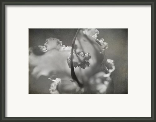 Tenderness Framed Print By Laurie Search