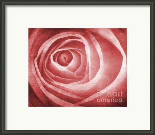 Textured Rose Macro Framed Print By Meirion Matthias