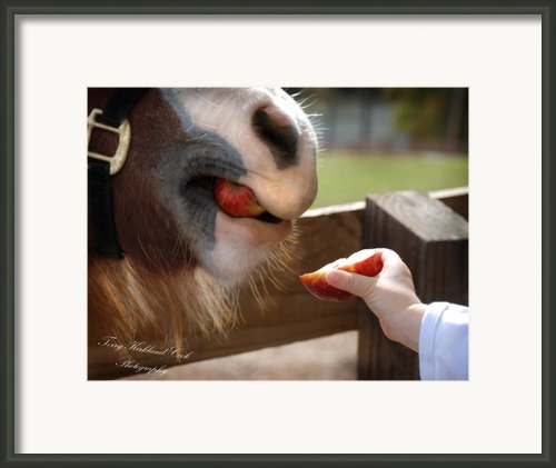 The Apple Framed Print By Terry Kirkland Cook