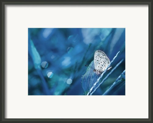 The Baby Dancing Framed Print By Amri Arfianto