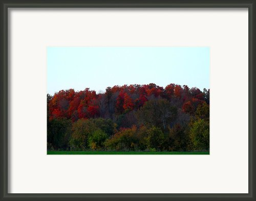 The Backyard Framed Print By Cyryn Fyrcyd