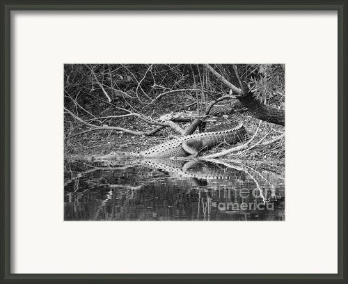 The Beast That Lives Under The Bridge Framed Print By Carol Groenen