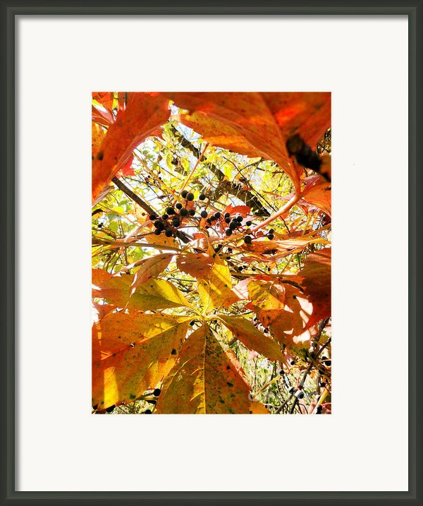 The Beauty In Dying Framed Print By Trish Hale