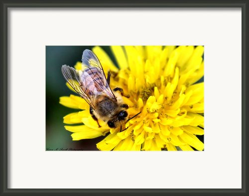The Bee Framed Print By Karen M Scovill
