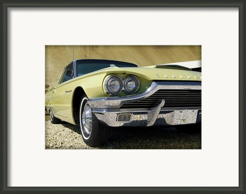 The Bird Framed Print By Robert Smith