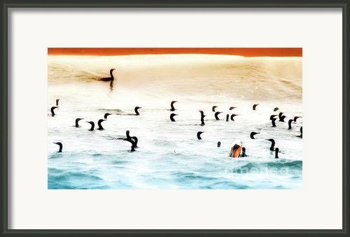 The Birds Santa Rosa Island Framed Print By Gus Mccrea