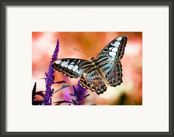 The Blue Clipper Framed Print By Lois Bryan