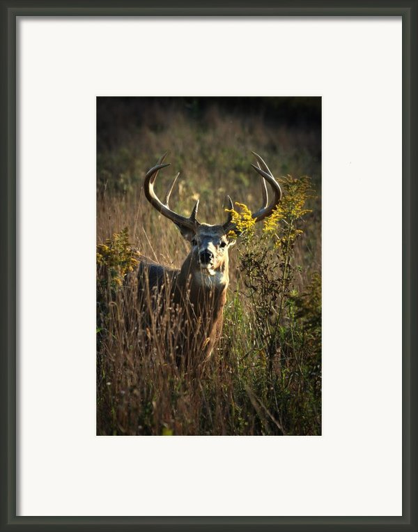 The Boss Framed Print By Emily Stauring
