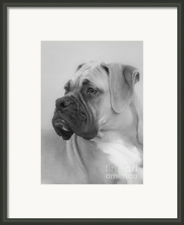 The Boxer Dog - The Gentleman Amongst Dogs Framed Print By Christine Till