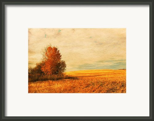 The Careful Breeze  Framed Print By Jerry Cordeiro