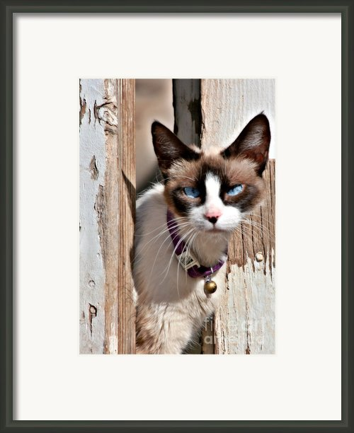 The Cat A Purrfect Carnivore Framed Print By Christine Till