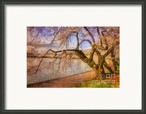 The Cherry Blossom Festival Framed Print By Lois Bryan