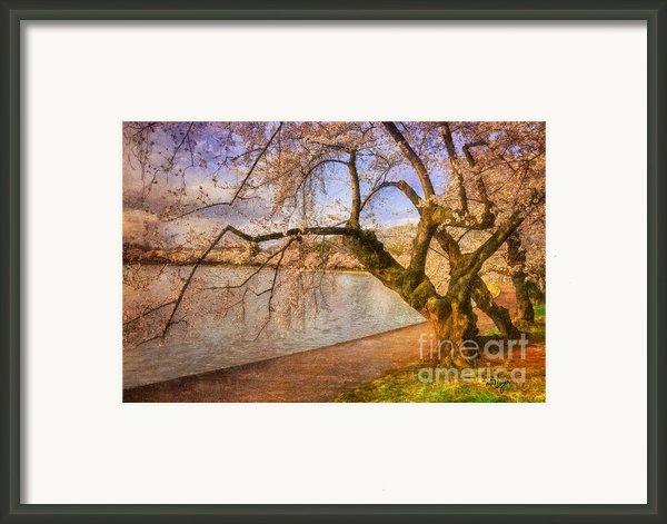 The Cherry Blossom Festival Framed Print By Lois Bryan