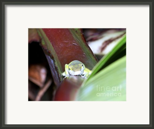 The Climb Framed Print By Karen Wiles