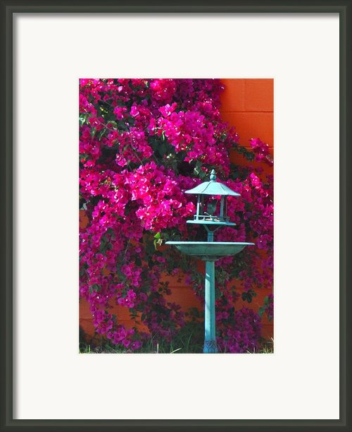 The Colors Of Florida Framed Print By Beth Hughes