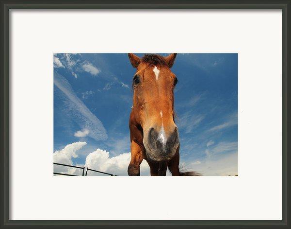 The Curious Horse Framed Print By Paul Ward