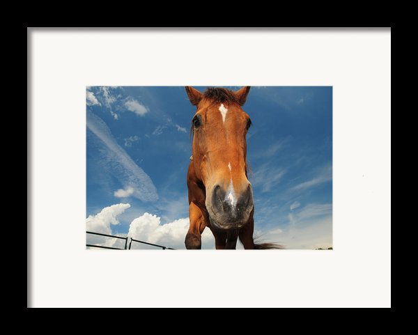 The Curious Horse Framed Print By Paul Ward