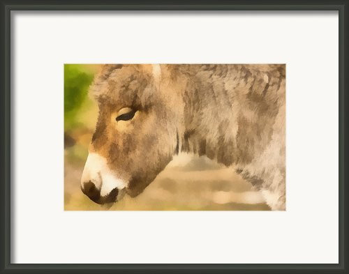 The Donkey Portrait Framed Print By Odon Czintos