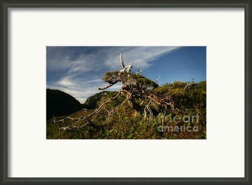 The Ent Tree Lives Framed Print By Evan Spellman
