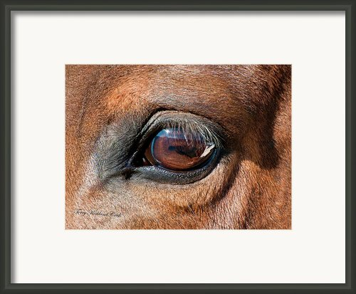 The Equine Eye Framed Print By Terry Kirkland Cook