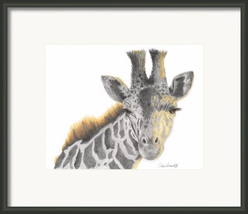 The Eyes Have It Framed Print By Phyllis Howard