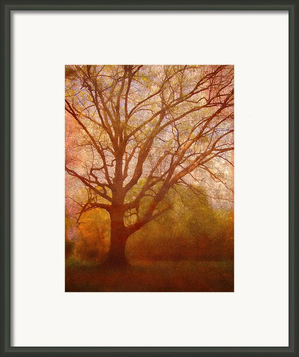 The Fairy Tree Framed Print By Brett Pfister