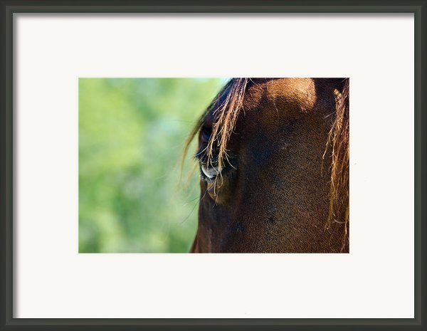The Gaze Framed Print By Lisa Moore