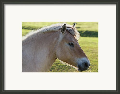 The Horse And The Fly Framed Print By Gert Lavsen