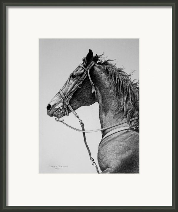 The Horse Framed Print By Harvie Brown