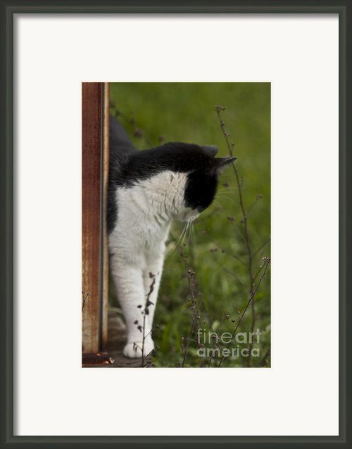 The Hunt Framed Print By Kim Henderson