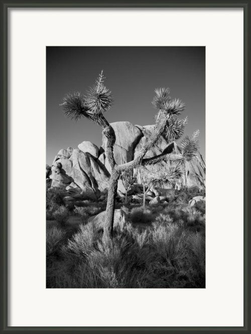 The Joshua Tree Framed Print By Peter Tellone