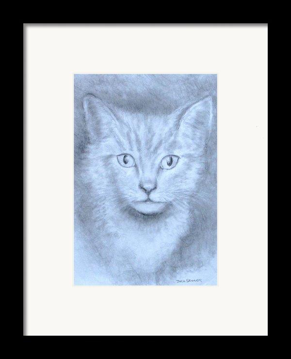 The Kitten Framed Print By Jack Skinner