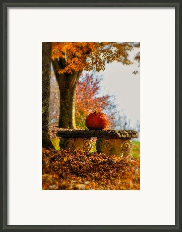 The Last Pumpkin Framed Print By Lois Bryan