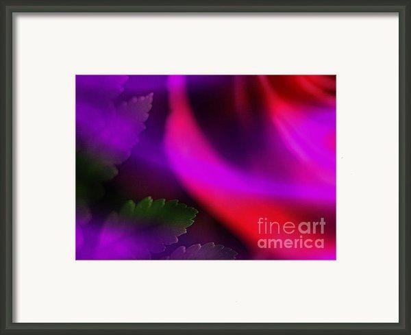 The Leaf And The Rose Framed Print By Judi Bagwell