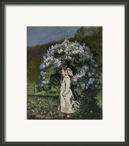 The Lilac Bush Framed Print By Olaf Isaachsen