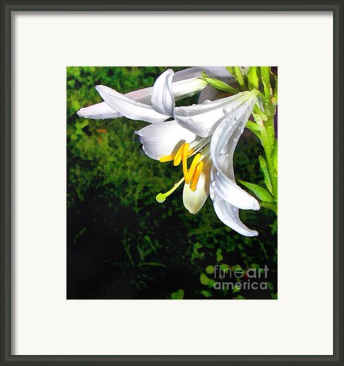 The Lily Framed Print By Odon Czintos