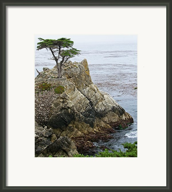 The Lone Cypress - California Framed Print By Brendan Reals