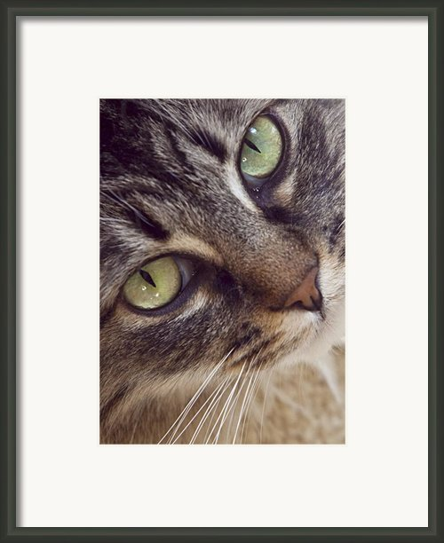 The Look Of Love Framed Print By Lynn Andrews