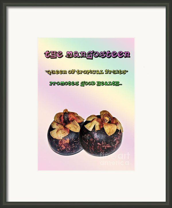 The Mangosteen - Queen Of Tropical Fruits Framed Print By Kaye Menner