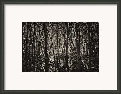 The Mangrove Framed Print By Armando Perez