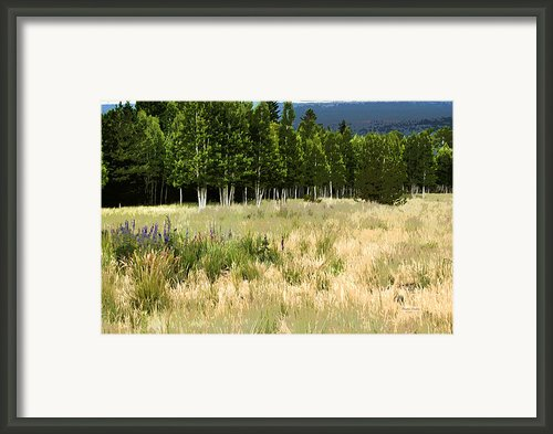 The Meadow Digital Art Framed Print By Phyllis Denton