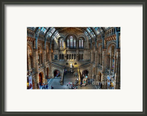 The Natural History Museum London Uk Framed Print By Donald Davis