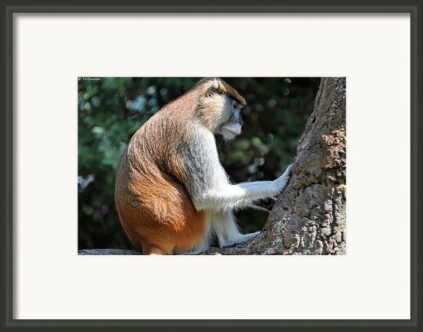 The Prayer Tree Framed Print By Teresa Blanton