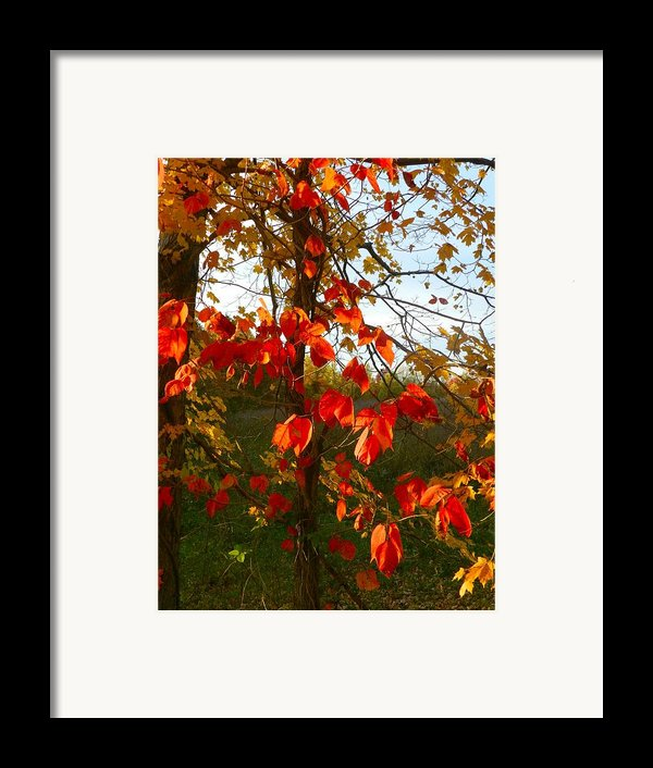The Reds Of Autumn Framed Print By Julie Dant