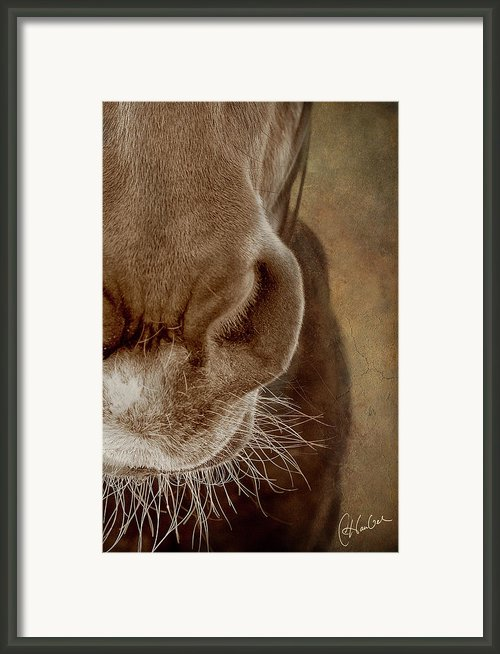 The Soft Spot Ii Framed Print By Christine Hauber