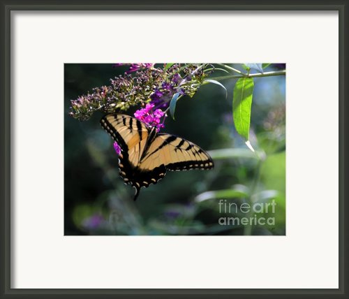 The Splendor Of Nature Framed Print By Gerlinde Keating - Keating Associates Inc