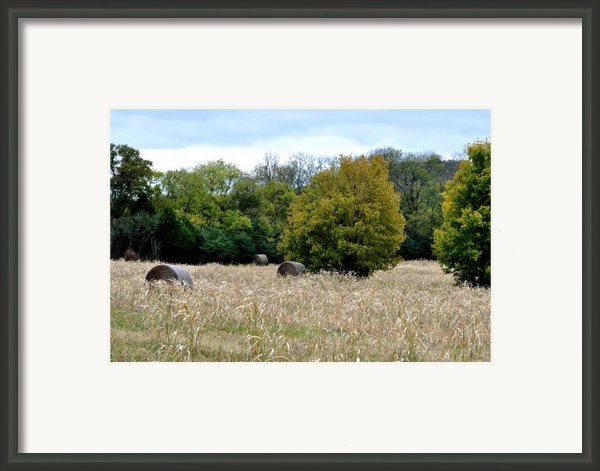 The Sun Is Still Shining Framed Print By Jan Amiss Photography