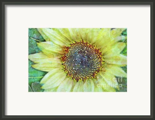 The Sunflower Framed Print By Tara Turner