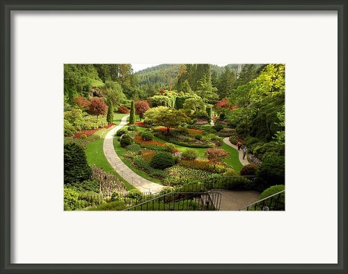 The Sunken Garden At Butchart Gardnes Framed Print By Darlyne A. Murawski